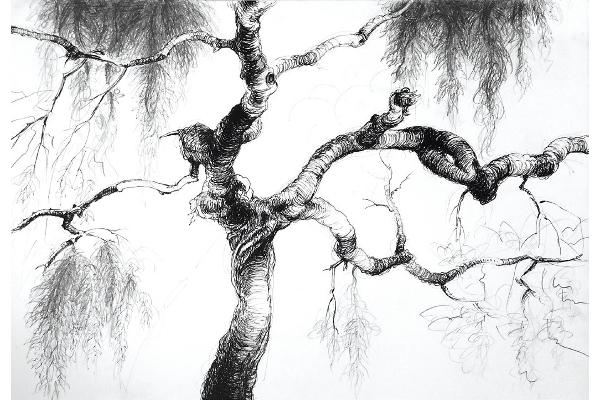 Art & méditation arbre