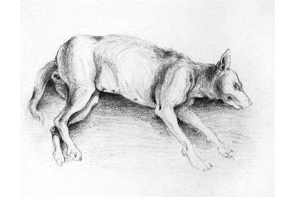 Art & méditation loup