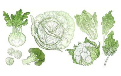 Cuisine nature : Chou-fleur rôti aux légumes verts vapeur